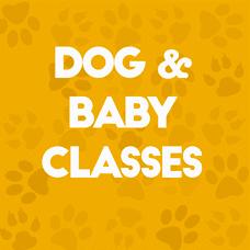 Dog Baby Classes
