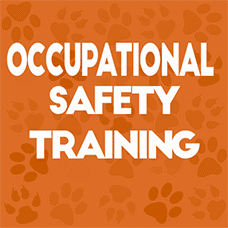 occupational safety training